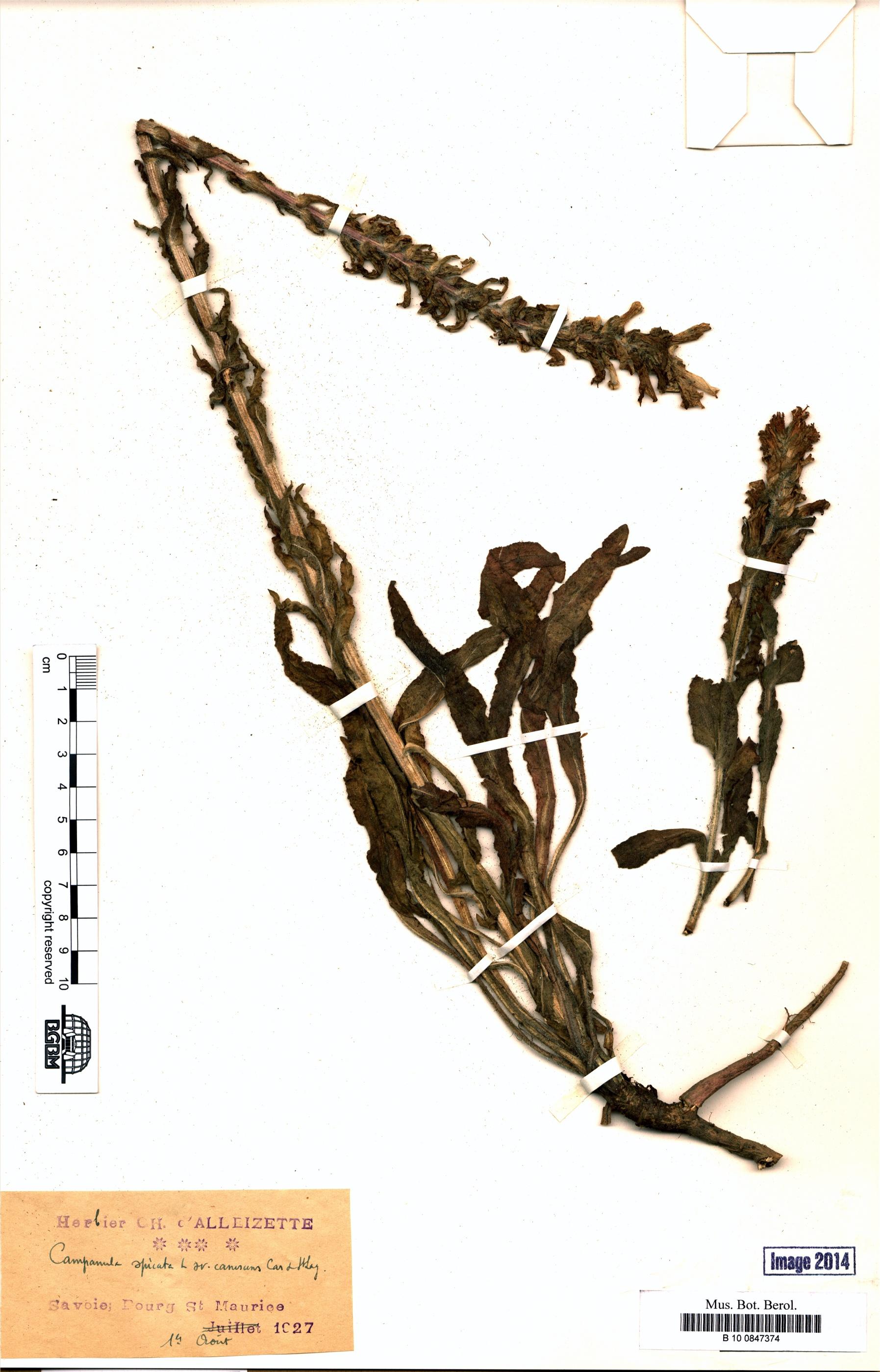 http://ww2.bgbm.org/herbarium/images/B/10/08/47/37/B_10_0847374.jpg