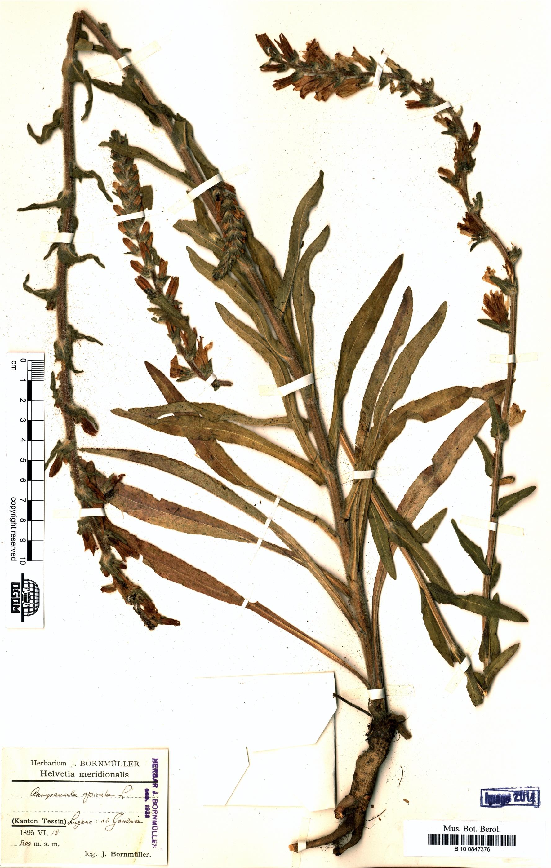 http://ww2.bgbm.org/herbarium/images/B/10/08/47/37/B_10_0847376.jpg
