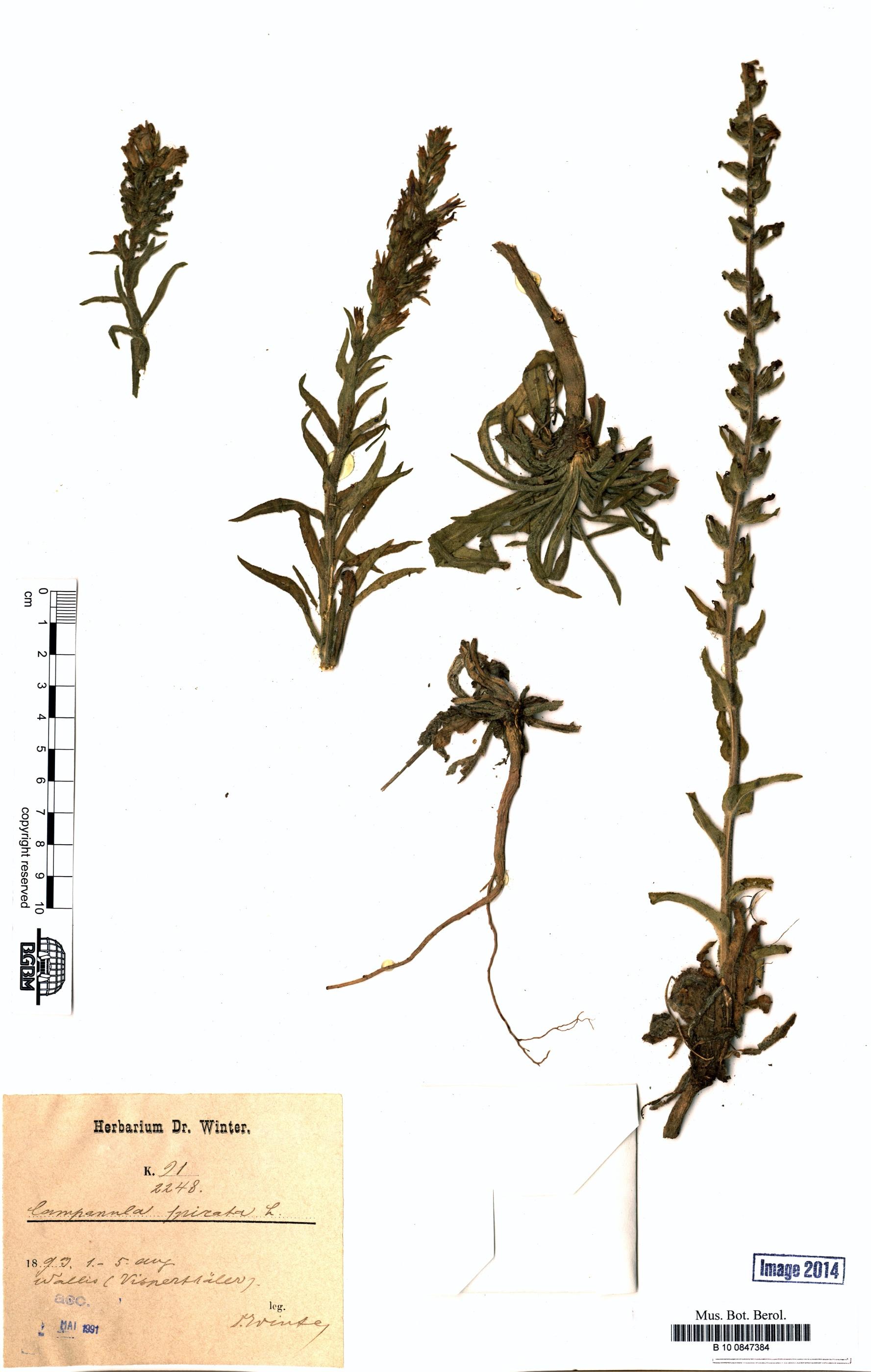 http://ww2.bgbm.org/herbarium/images/B/10/08/47/38/B_10_0847384.jpg