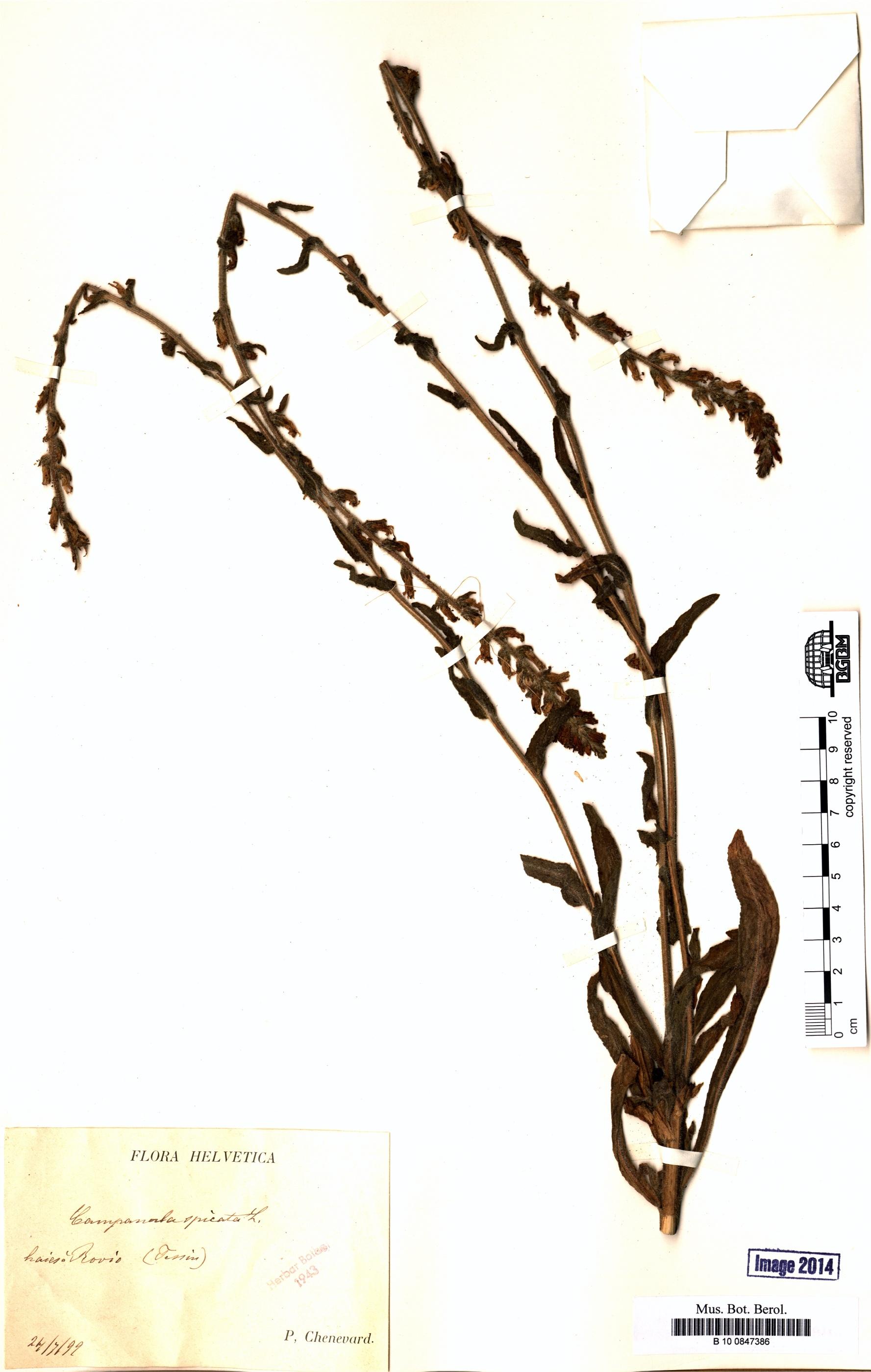 http://ww2.bgbm.org/herbarium/images/B/10/08/47/38/B_10_0847386.jpg