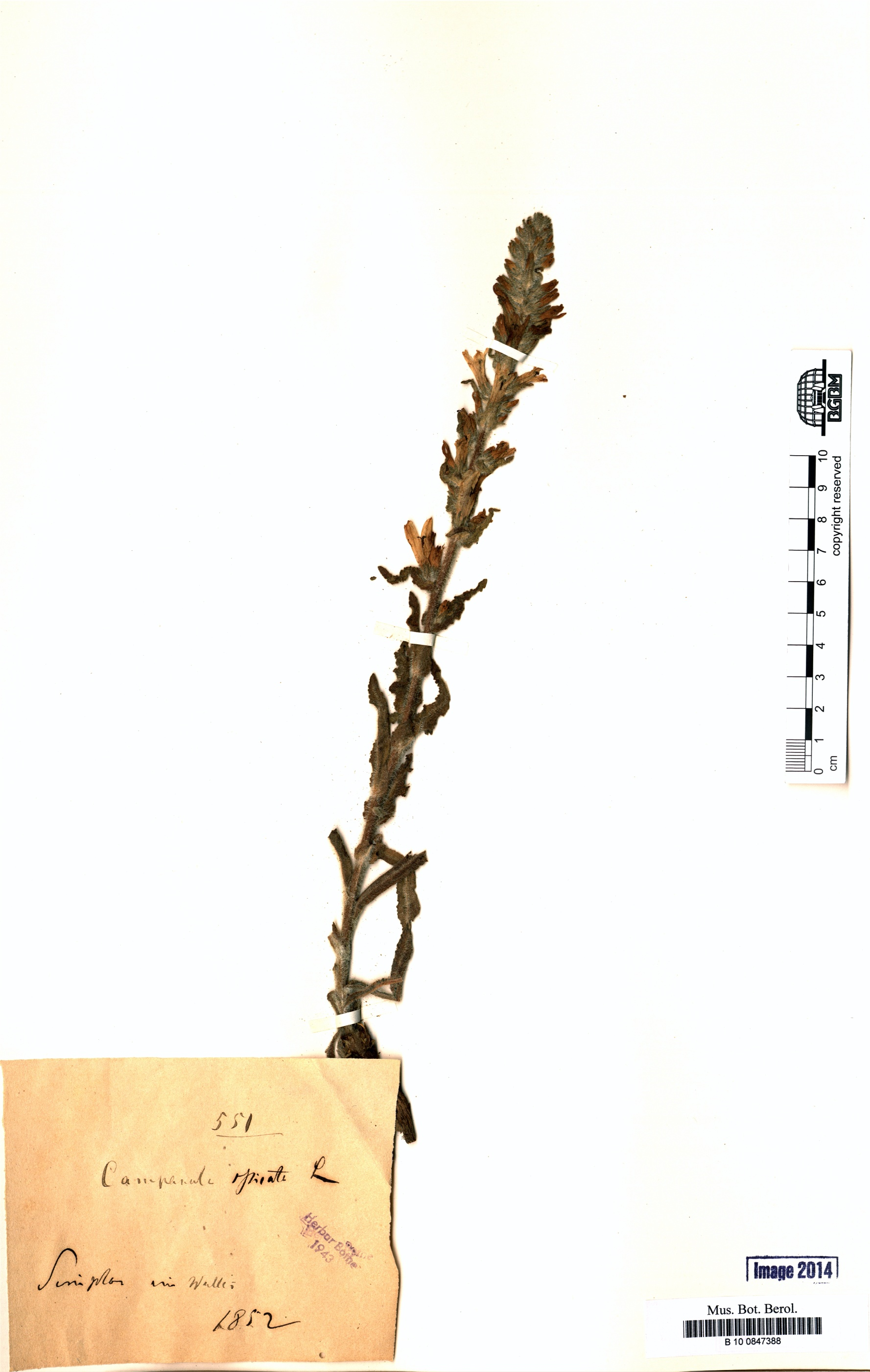 http://ww2.bgbm.org/herbarium/images/B/10/08/47/38/B_10_0847388.jpg