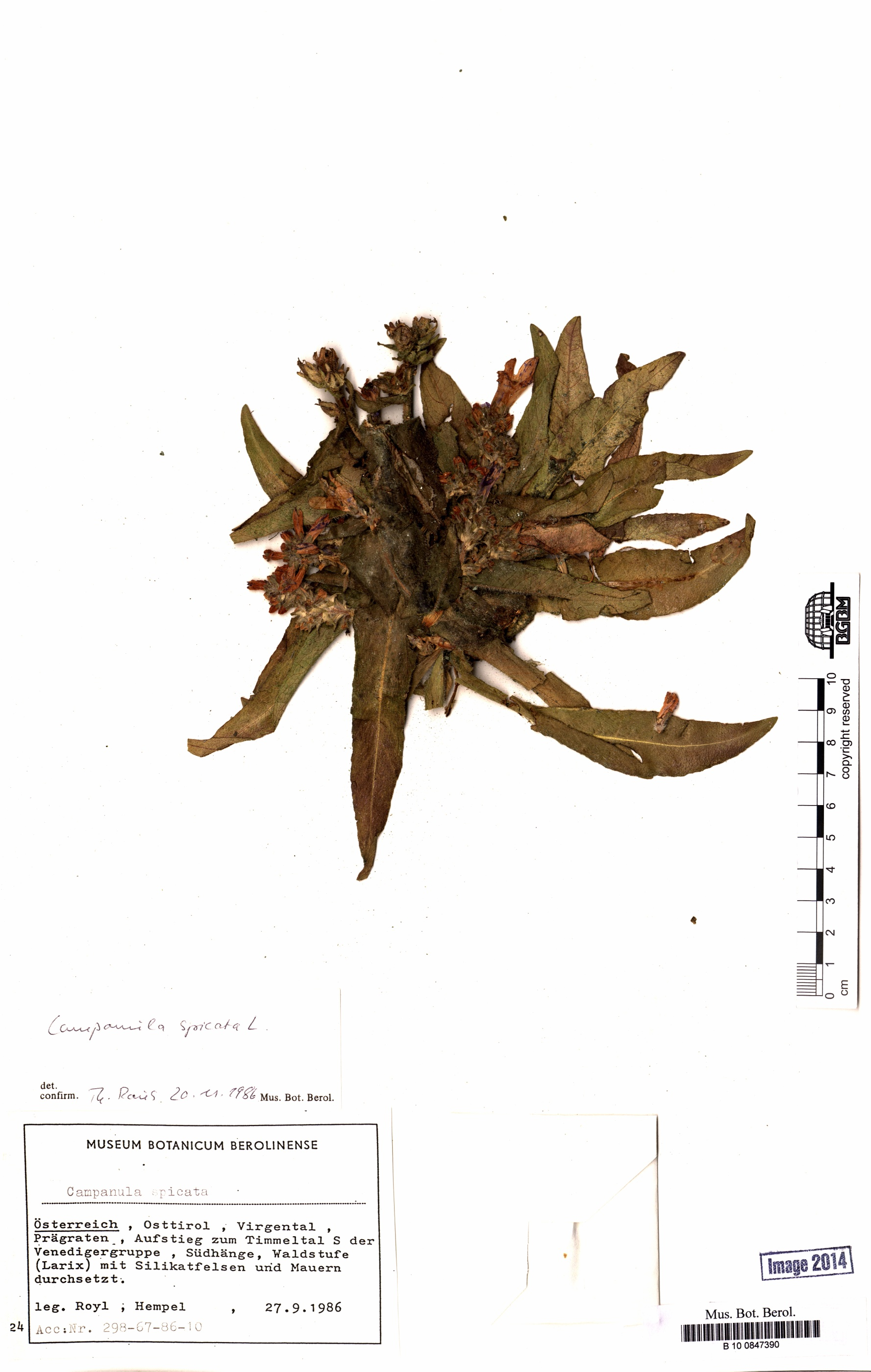 http://ww2.bgbm.org/herbarium/images/B/10/08/47/39/B_10_0847390.jpg
