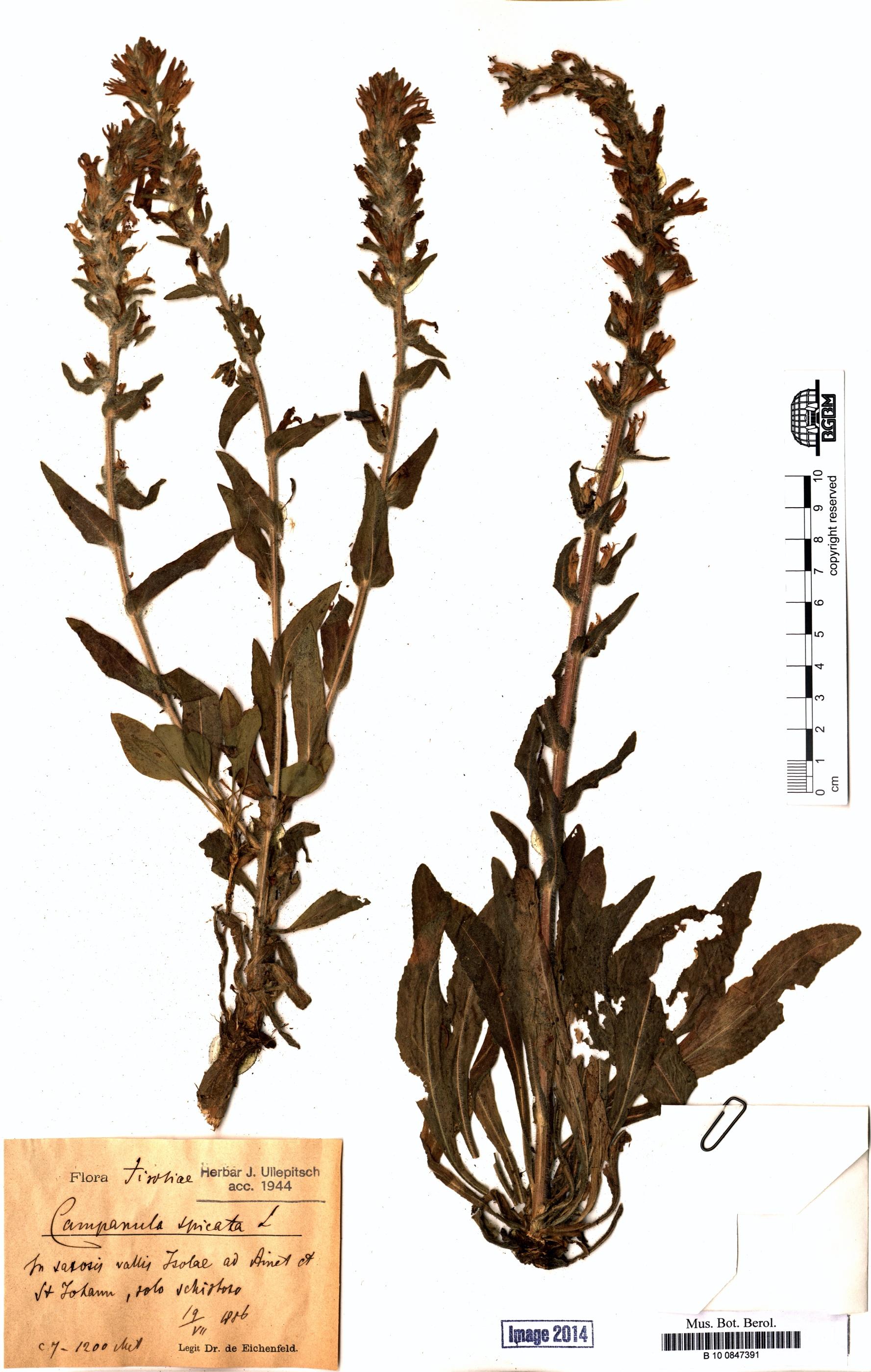 http://ww2.bgbm.org/herbarium/images/B/10/08/47/39/B_10_0847391.jpg
