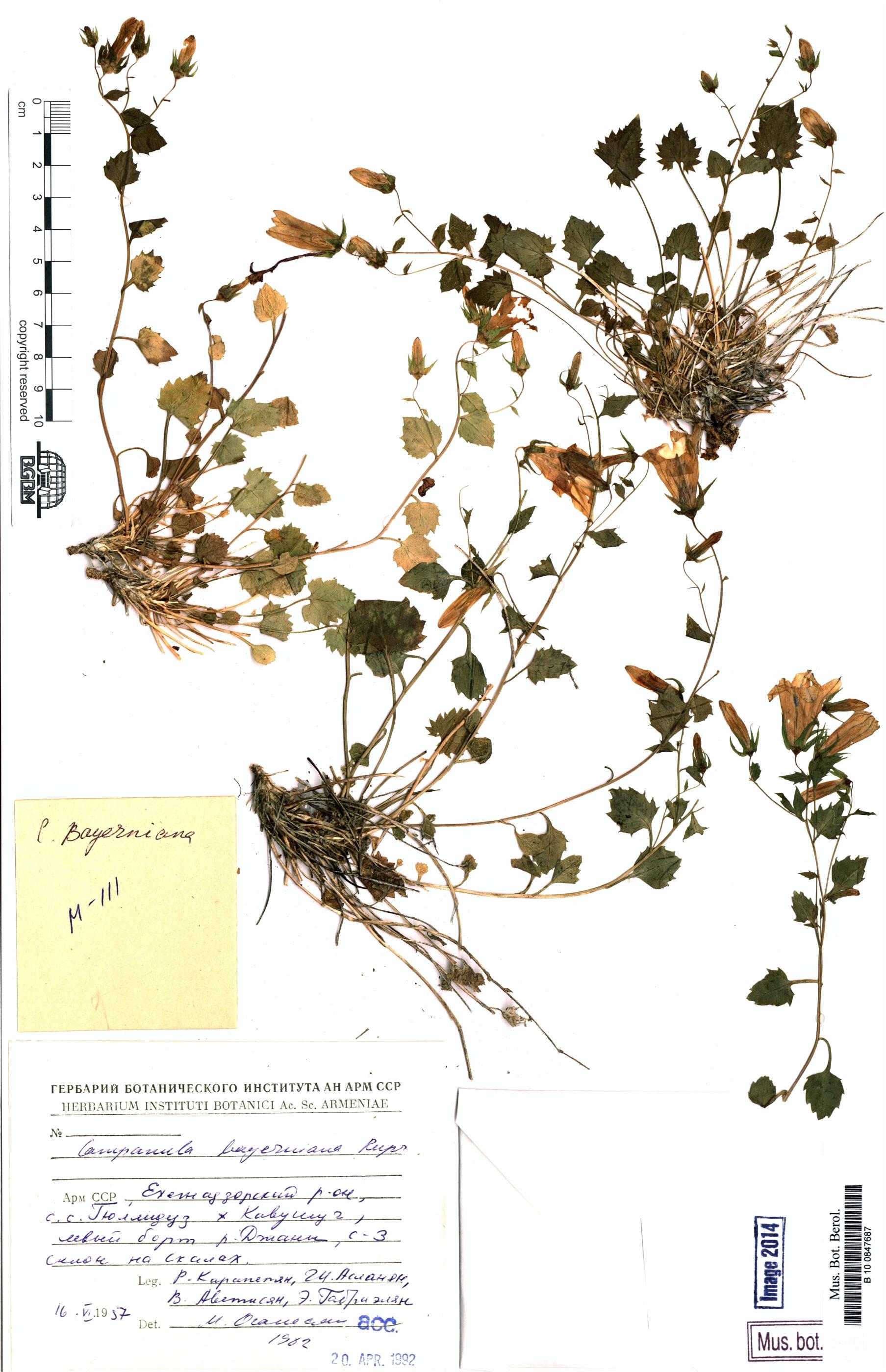 http://ww2.bgbm.org/herbarium/images/B/10/08/47/68/B_10_0847687.jpg