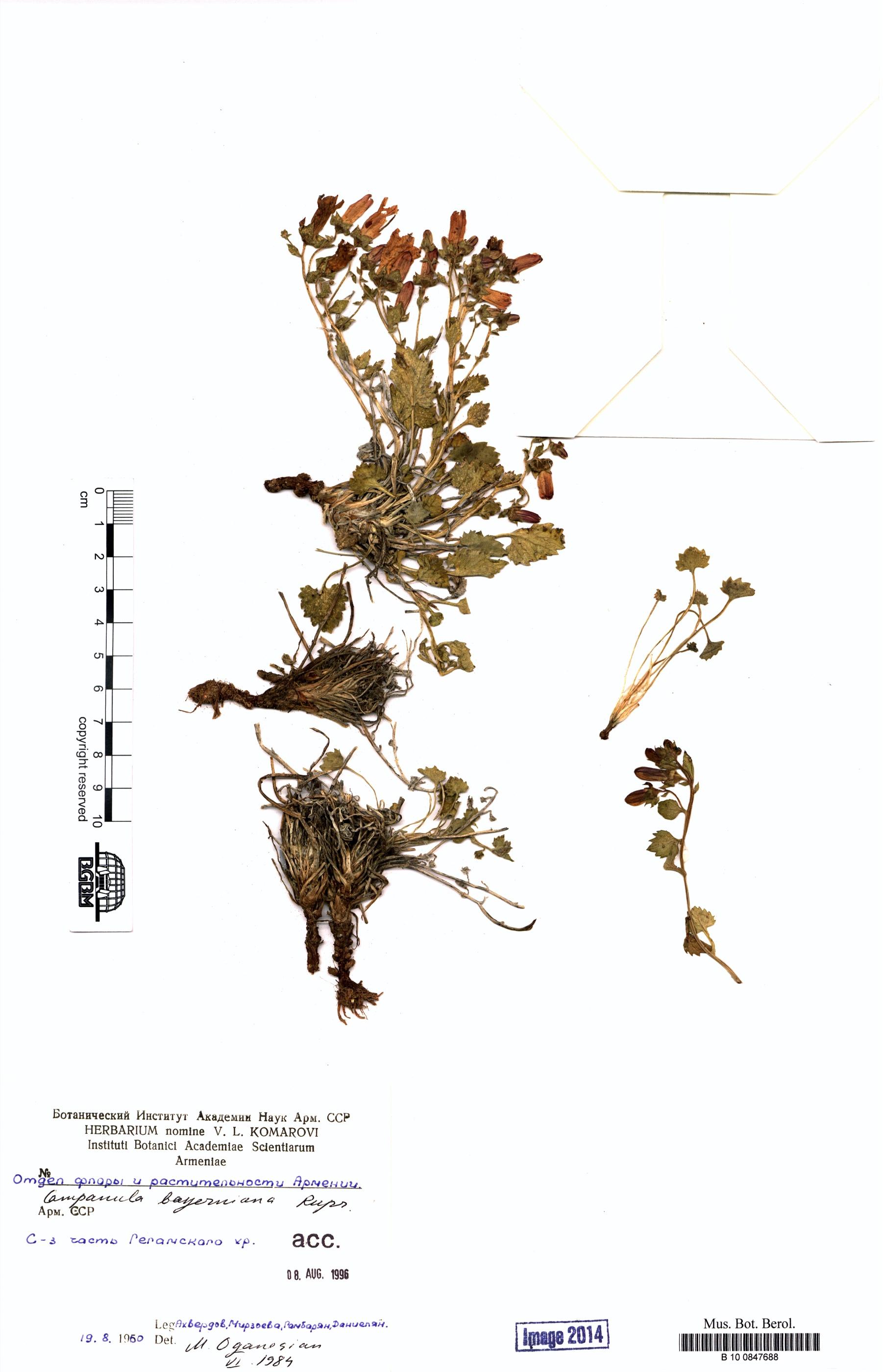 http://ww2.bgbm.org/herbarium/images/B/10/08/47/68/B_10_0847688.jpg