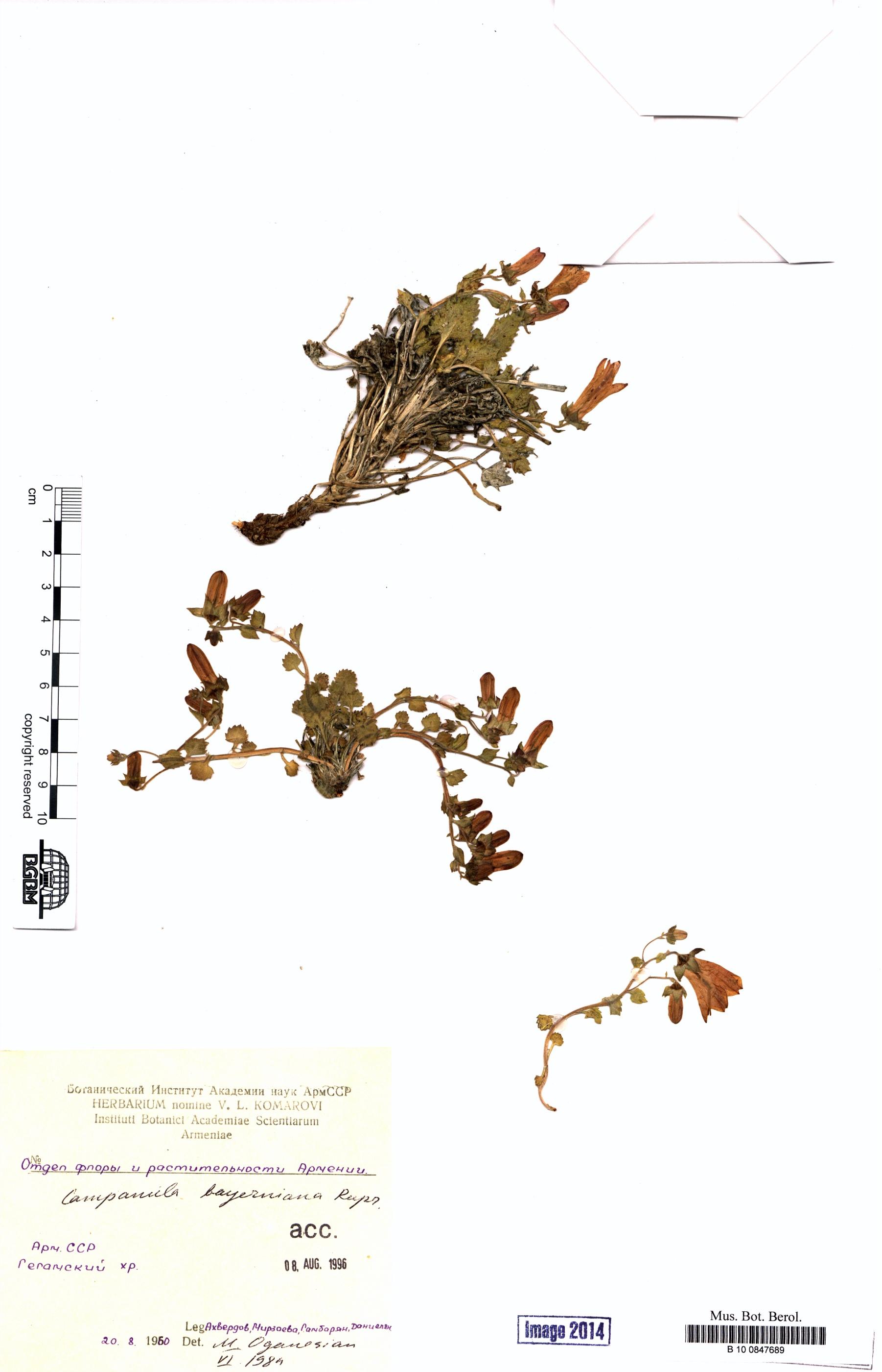 http://ww2.bgbm.org/herbarium/images/B/10/08/47/68/B_10_0847689.jpg
