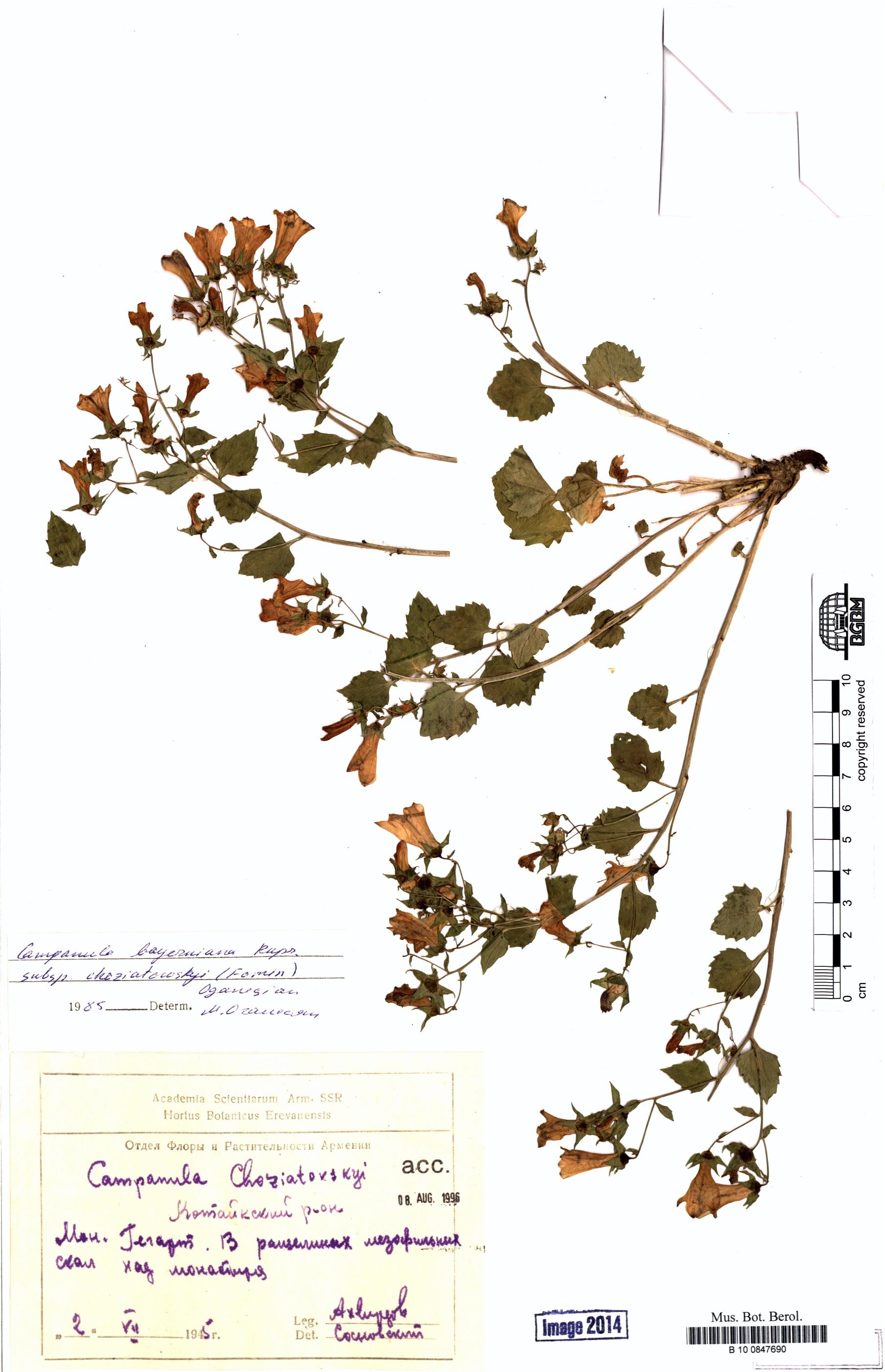 http://ww2.bgbm.org/herbarium/images/B/10/08/47/69/B_10_0847690.jpg