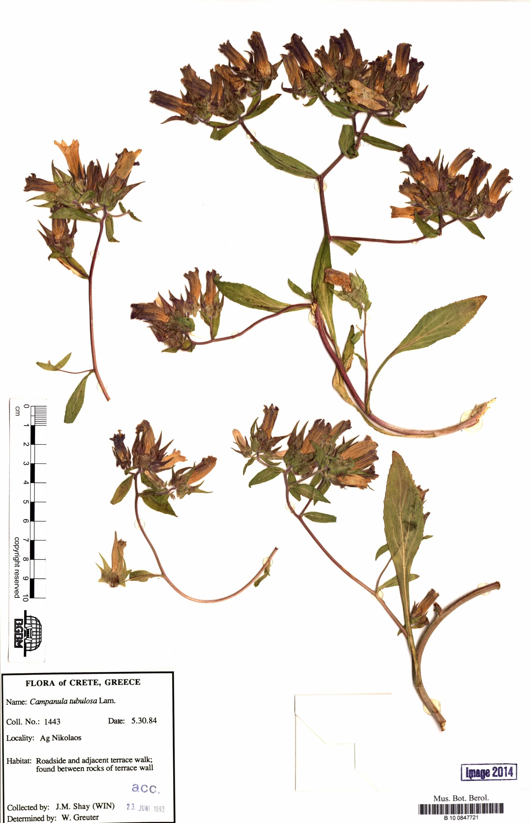 http://ww2.bgbm.org/herbarium/images/B/10/08/47/72/B_10_0847721.jpg