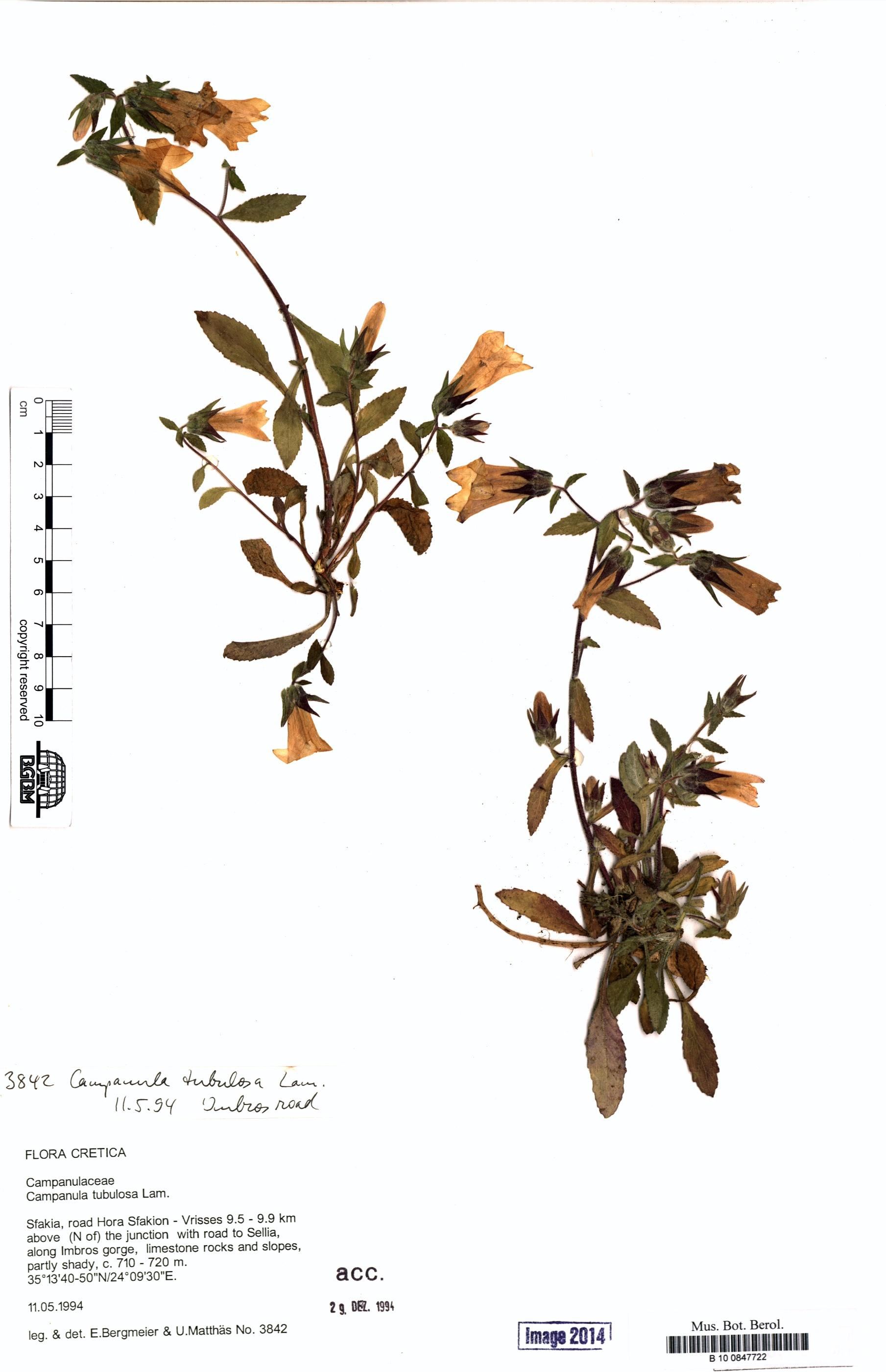 http://ww2.bgbm.org/herbarium/images/B/10/08/47/72/B_10_0847722.jpg