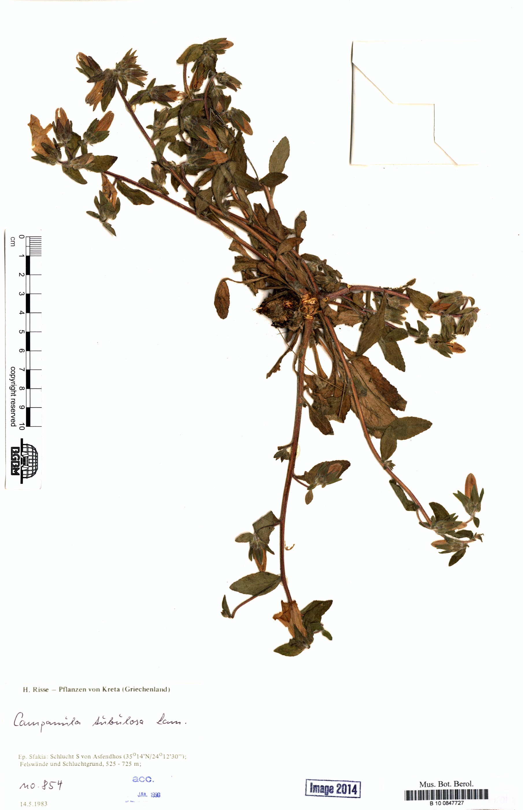 http://ww2.bgbm.org/herbarium/images/B/10/08/47/72/B_10_0847727.jpg