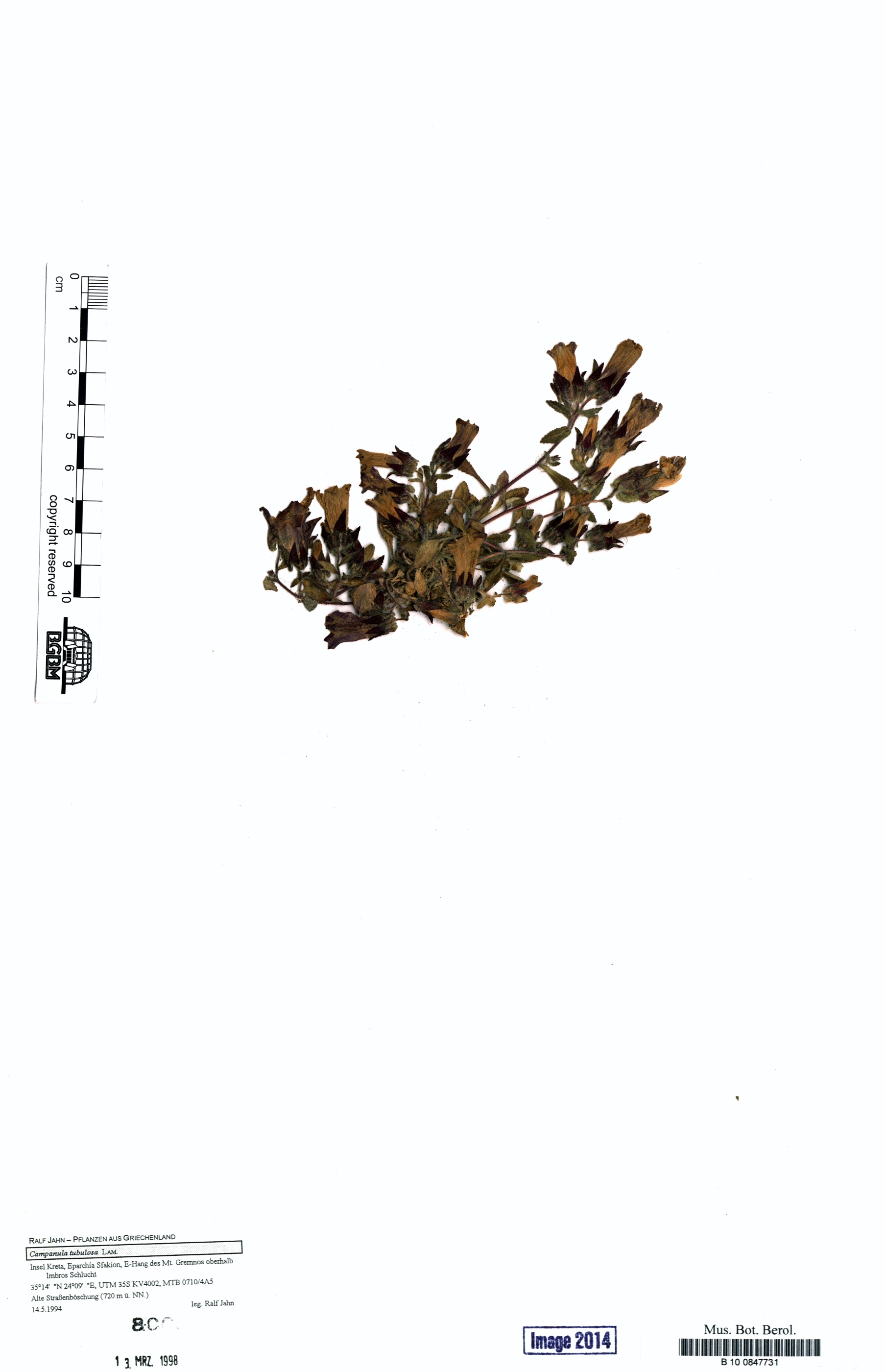 http://ww2.bgbm.org/herbarium/images/B/10/08/47/73/B_10_0847731.jpg