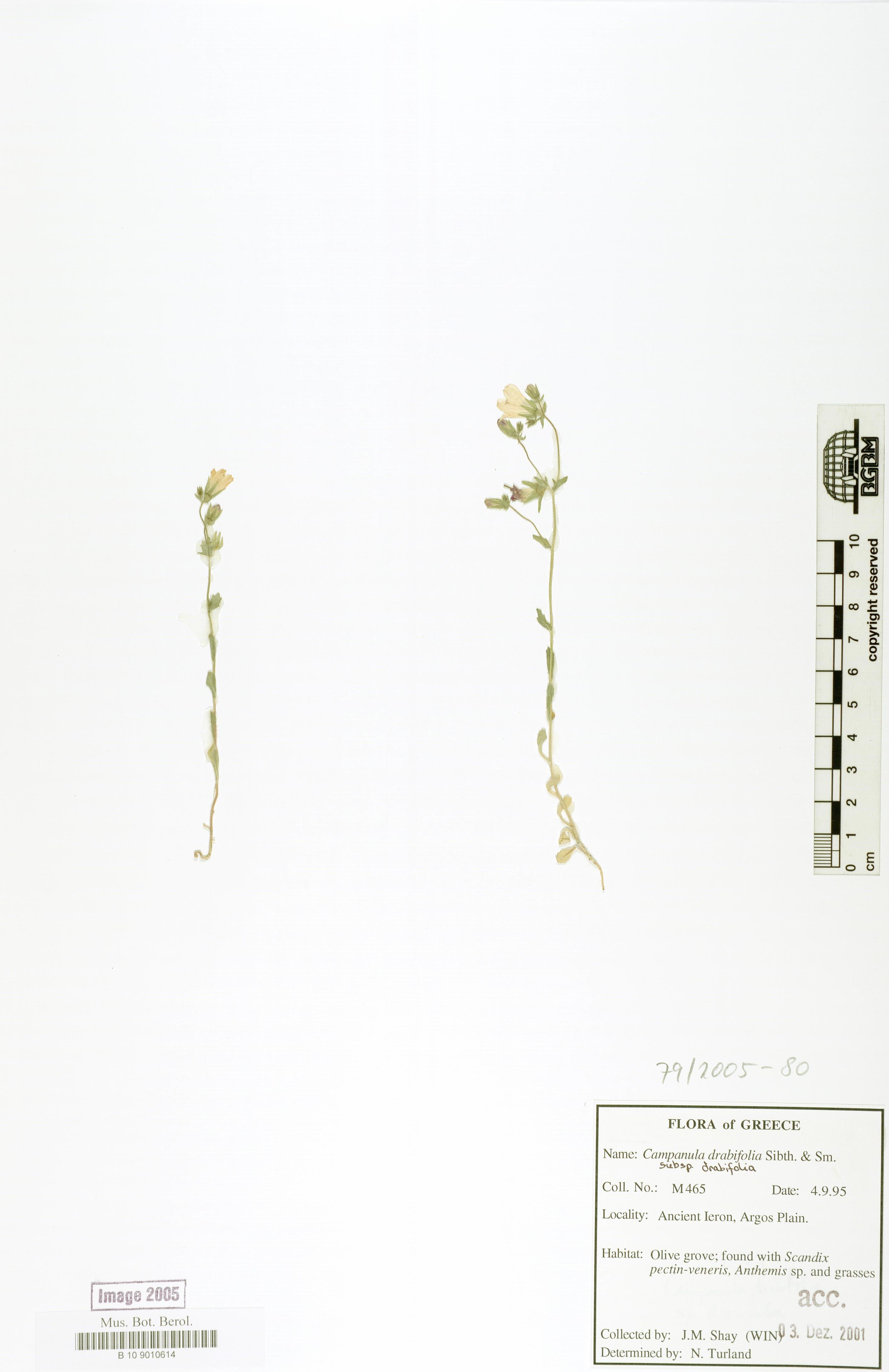 http://ww2.bgbm.org/herbarium/images/B/10/90/10/61/B_10_9010614.jpg