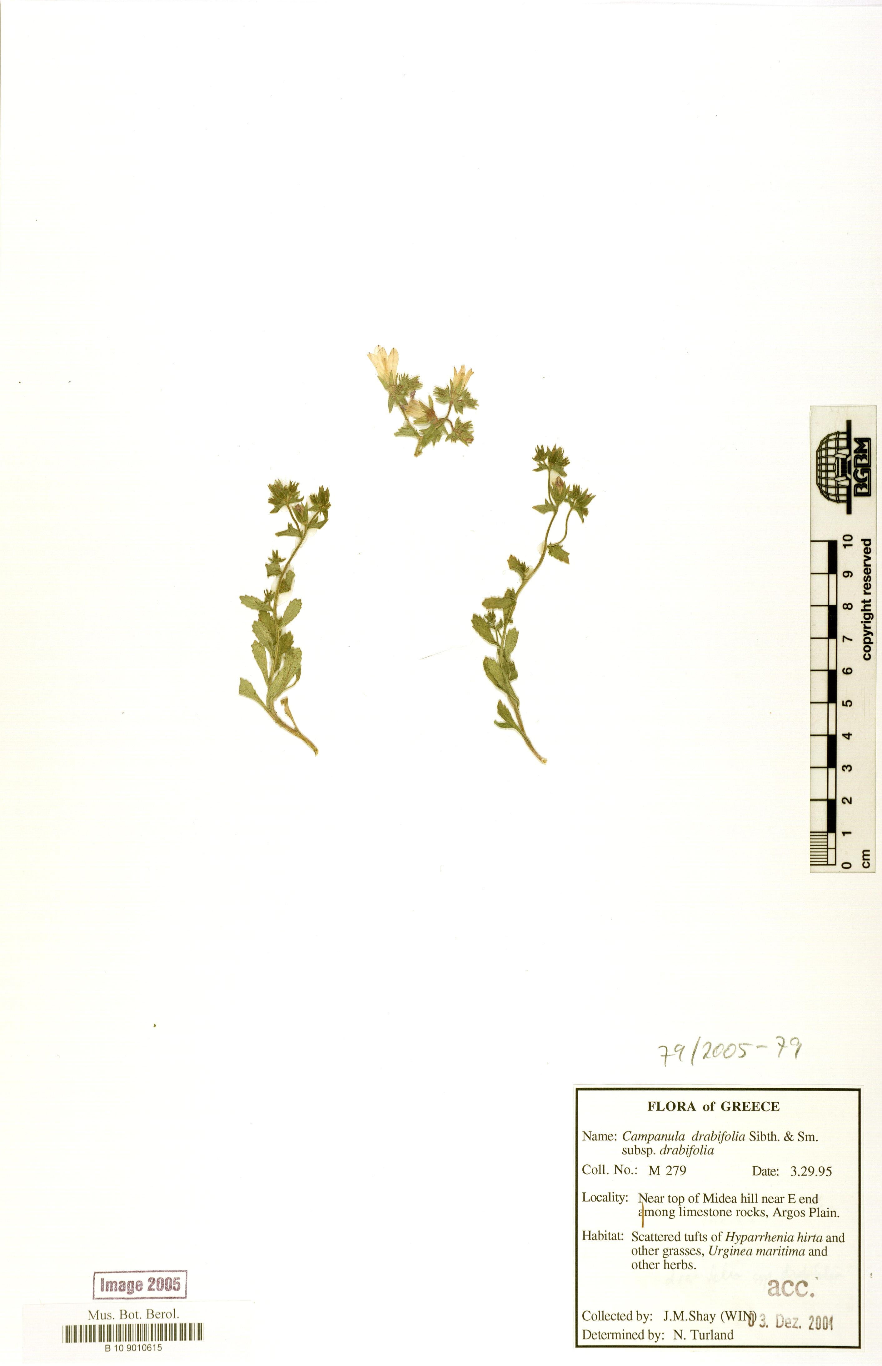 http://ww2.bgbm.org/herbarium/images/B/10/90/10/61/B_10_9010615.jpg