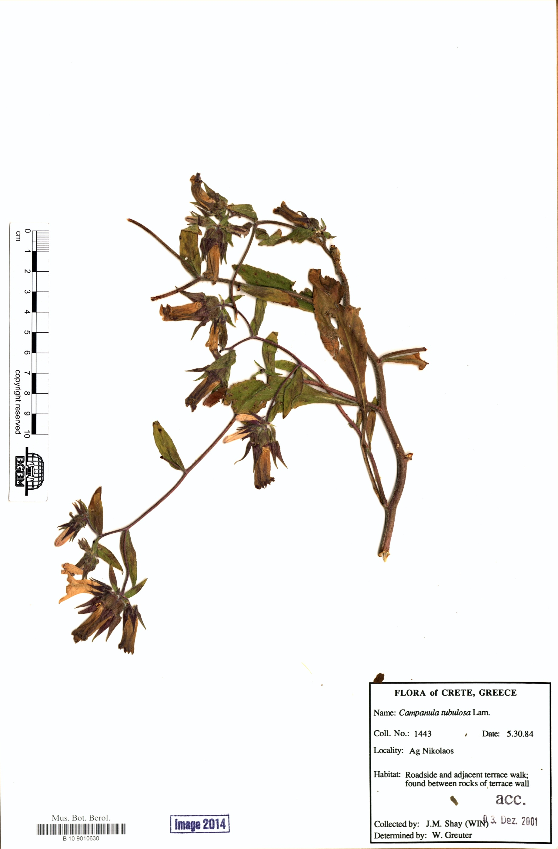 http://ww2.bgbm.org/herbarium/images/B/10/90/10/63/B_10_9010630.jpg